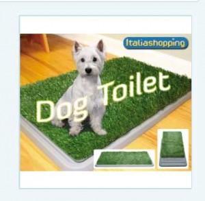 """La formazione di un cane ad essere un """"boat dog""""."""
